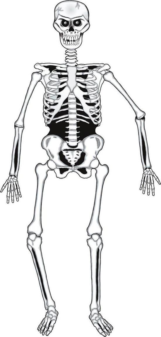 Esqueleto articulado cartón Halloween 140 cm: Decoración,y disfraces ...