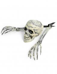 Esqueleto decorativo