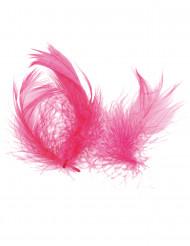 Pequeñas plumas fuschia
