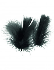 Pequeñas plumas negras