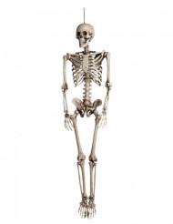 Decoración colgante esqueleto Halloween 160 cm