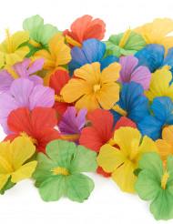 24 Flores hawaianas