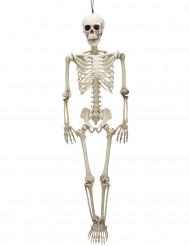 Esqueleto móvil 90 cm Halloween