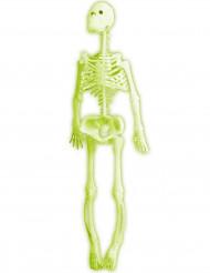 Esqueleto fluorescente 35 cm Halloween