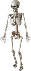 Esqueleto para colgar 120 cm Halloween