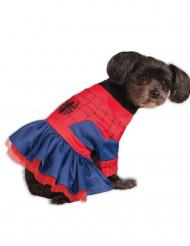 Disfraz perro Spider Girl™