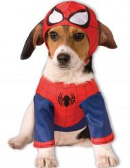 Disfraz perro Spiderman™