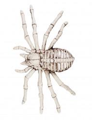 Decoración esqueleto araña 12x24 cm Halloween