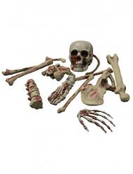 Decoración esqueleto sangriento Halloween
