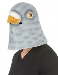 Máscara de paloma látex adulto