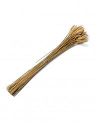Bouquet de trigo natural 60 cm