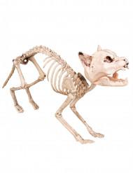 Decoración esqueleto de gato 60 cm Halloween