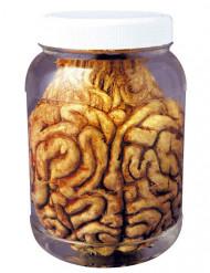 Bote con cerebro Halloween 14 cm