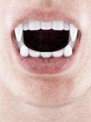 Dentadura de vampiro blanco
