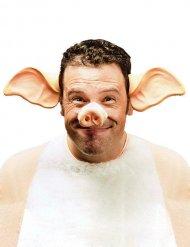 Diadema orejas de cerdo adulto