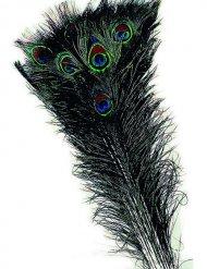 Pluma de pavo real verde azul