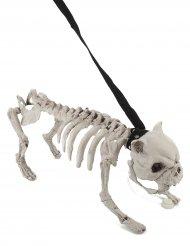 Perro esqueleto con correa luminoso y sonoro