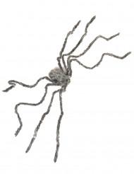 Araña peluda gris gigante