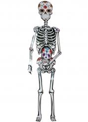 Esqueleto 152 cm Día de los muertos