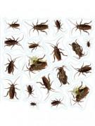 Pegatinas insectos