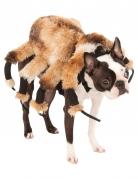 Disfraz para perro araña gigante